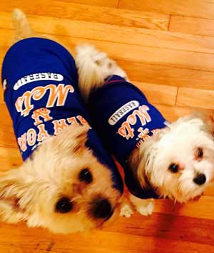 JRK Bearings Boss Dogs